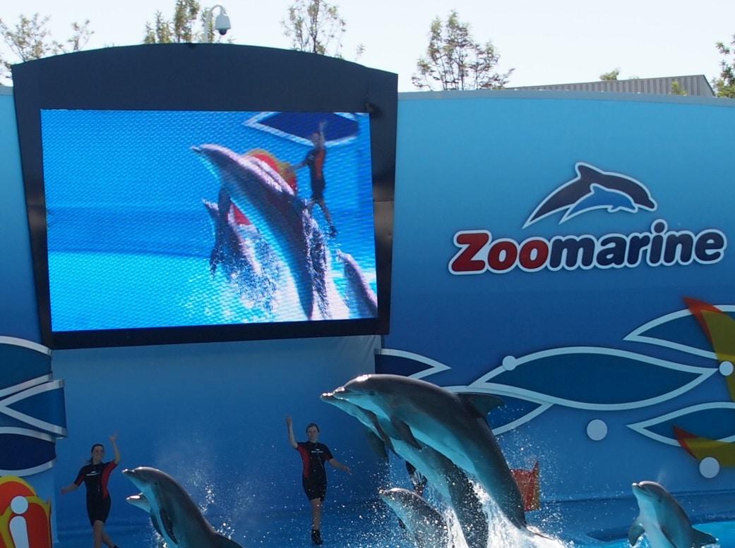 Ecran Ledoneo chez Zoomarine Portugal